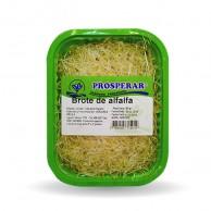Wiñay-sitio-procesados-brote_de_alfalfa